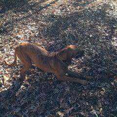 Photo taken at Oakhurst Dog Park by Kelli C. on 11/26/2014