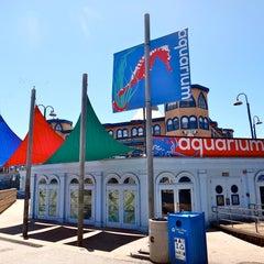 Photo taken at Heal the Bay's Santa Monica Pier Aquarium by Heal the Bay's Santa Monica Pier Aquarium on 12/15/2013