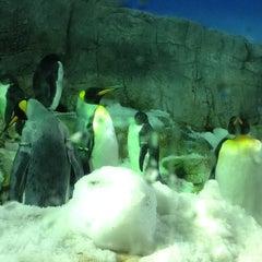 Photo taken at 海遊館 (Osaka Aquarium Kaiyūkan) by Morgan M. on 9/29/2012