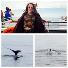 Photo taken at Boston Harbor Whale Watch by Isabella M. on 7/10/2014