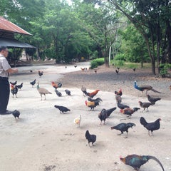 Photo taken at วัดป่ากุง (วัดประชาคมวนาราม) by Molly R. on 7/23/2015