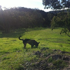 Photo taken at Crocker Amazon Park Dog Play Area by virginie d. on 12/31/2012