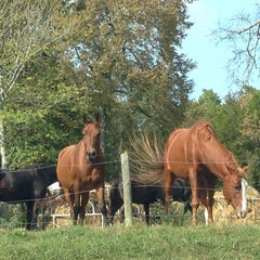 Photo taken at Juro Stables by Drew F. on 10/13/2013