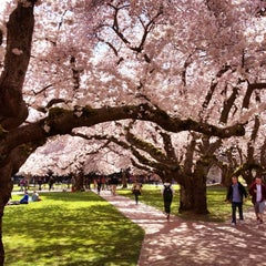Photo taken at UW Quad by Pania T. on 4/6/2012
