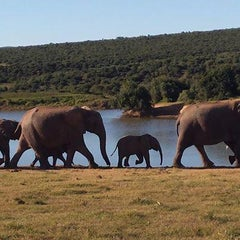 Photo taken at Pumba Private Game Reserve by Linda K. on 11/13/2014