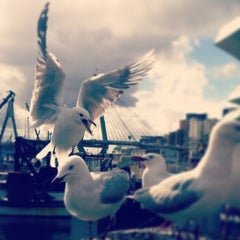 Photo taken at Sydney Fish Market by Ozan T. on 3/3/2013