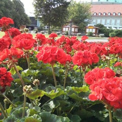 Photo taken at Stadtpark Hannover by Kai R. on 7/17/2013