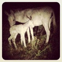 Photo taken at Kichanga Lodge Donkey Sanctuary by Silvia N. on 8/16/2013