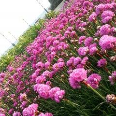 Photo taken at Southsea Rose Garden by Rayyan K. on 5/4/2014