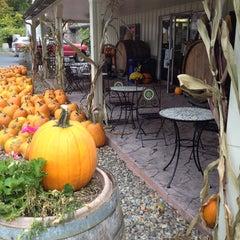 Photo taken at Sorrenti Cherry Valley Vineyards by Warren R. on 9/30/2014