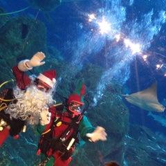 Photo taken at Adventure Aquarium by Heyjin K. on 12/22/2012