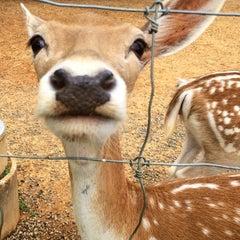 Photo taken at Natural Bridge Zoo by Dionne W. on 6/22/2014