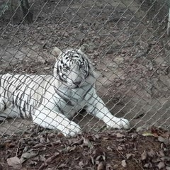 Photo taken at Carolina Tiger Rescue by Raghavendra P. on 9/27/2014