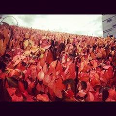 Photo taken at Sigma Sigma Commons - University of Cincinnati by Matt F. on 10/23/2012