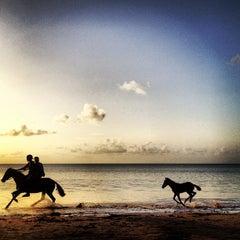 Photo taken at Sandals Halcyon Beach Resort by LBar 5. on 5/28/2012