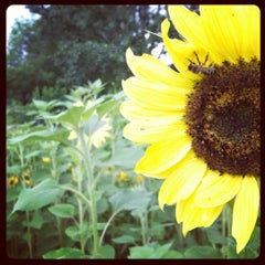 Photo taken at Cure Organic Farm by Kate Y. on 6/29/2012