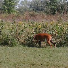 Photo taken at Howard Dog Park by Benjamin M. on 9/4/2012