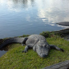 Photo taken at Gatorland by Nadira M. on 2/23/2012