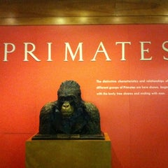 Photo taken at Hall Of Primates by Teófilo F. on 12/8/2011