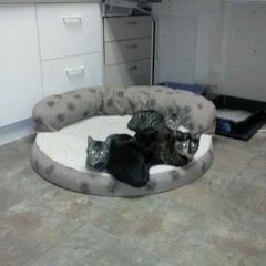 Photo taken at Catalina Island Humane Society Inc. by Airalin B. on 1/18/2012