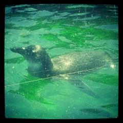 Photo taken at New York Aquarium by Karalyn S. on 6/30/2012