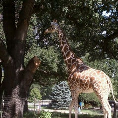 Photo taken at Giraffe House by Amy O. on 8/28/2011