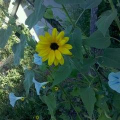 Photo taken at Urban Garden by Russ D. on 8/13/2011