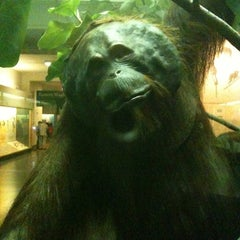 Photo taken at Hall Of Primates by Eric A. on 8/1/2011