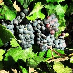 Photo taken at Ceja Vineyards by Luis G. on 8/11/2012