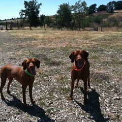 Photo taken at Alston Dog Park by Aimee P. on 8/17/2012