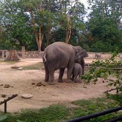 Photo taken at Zoo Taiping & Night Safari by Eric P. on 1/16/2011