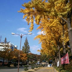 Photo taken at 연세대학교 (Yonsei University) by Byoungho J. on 10/30/2011