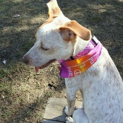 Photo taken at White Rock Lake Dog Park by Shawn C. on 10/14/2011