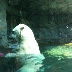 Photo taken at Polar Bear Odyssey At Como Park by Eric W. on 6/17/2012