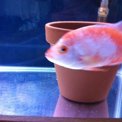 Photo taken at Fish Tank Maintenance Time by Mike ⚽⚽ on 5/24/2012
