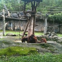 Photo taken at Taman Safari Indonesia II by Gilang M. on 2/5/2012
