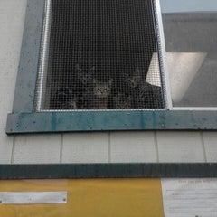 Photo taken at Catalina Island Humane Society Inc. by Airalin B. on 11/7/2011