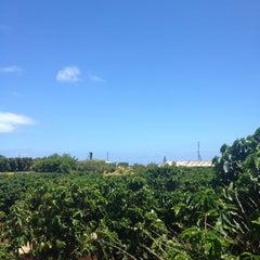 Photo taken at Kauai Coffee Plantation by Courtney on 6/20/2012