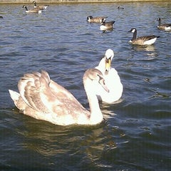 Photo taken at Abington Park Lake by Dave on 9/28/2011