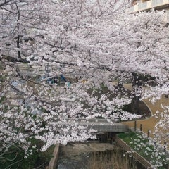 Photo taken at 大横川親水公園 by Hidetoshi F. on 4/7/2012