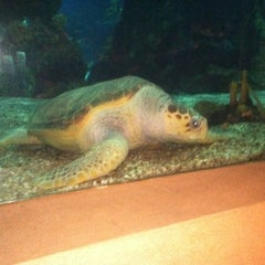 Photo taken at Coral Reef Restaurant by Heather S. on 2/28/2011