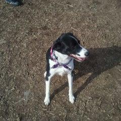 Photo taken at Battle Creek Dog Park by Adam M. on 2/20/2012