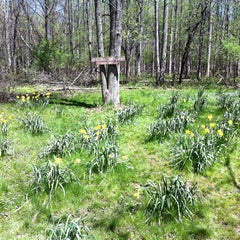 Photo taken at Powder Mills Park by Andrew W. on 5/8/2011