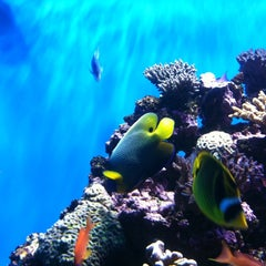 Photo taken at Birch Aquarium At Scripps Institution of Oceanography by La Broi W. on 1/15/2011