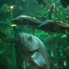 Photo taken at Oregon Coast Aquarium by Antjuan L. on 6/28/2012