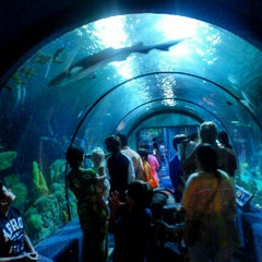 Photo taken at Moody Gardens Aquarium Pyramid by Dominic M. on 9/2/2012