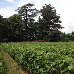 Photo taken at Vigneto Giardino by Lucia B. on 6/6/2012