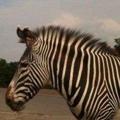 Photo taken at West Midland Safari & Leisure Park by Benjii on 7/31/2011