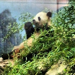 Photo taken at Smithsonian National Zoological Park by Jen K. on 8/12/2012