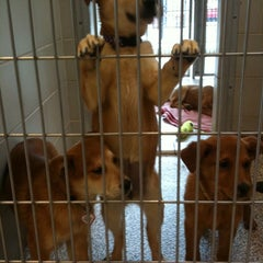 Photo taken at Humane Society of Boulder Valley by Meghan E. on 3/25/2011